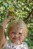 Happy little girl picking apple from tree Stock Photos