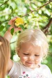 Happy little girl picking apple from tree royalty free stock photography