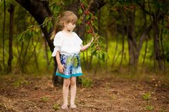 Happy little girl play near cherry tree in summer garden. Kid picking cherry on fruit farm. Child pick cherries in orchard. stock images
