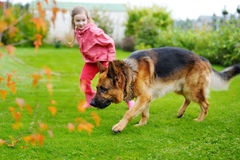 Happy little girl playing with a big dog Stock Images
