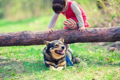 Little girl playing with the dog stock photography