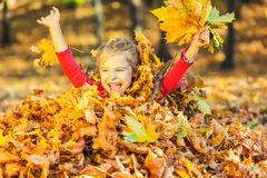 Happy little girl plays with autumn leaves. In the park Royalty Free Stock Photos