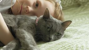 Little girl with a gray cat. Happy little girl with red hair with a gray cat on a sofa, relax stock footage