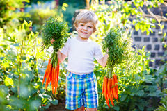 Happy little kid boy with carrots in domestic garden Royalty Free Stock Photo
