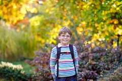 Happy little kid boy with glasses and backpack or satchel on his first day to school on sunny autumn day. Child outdoors. With beautiful yellow and read maple royalty free stock photography