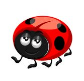 A happy little ladybird Royalty Free Stock Photo