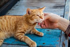 Happy little red cat is pleased with hand stroking. stock images