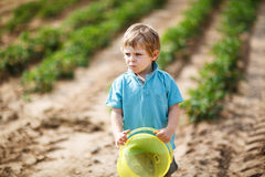 Happy little toddler boy on pick a berry farm picking strawberri Royalty Free Stock Photo