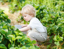 Happy little toddler boy on pick a berry farm picking strawberri Stock Photography