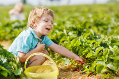Happy little toddler boy on pick a berry farm picking strawberri Stock Images