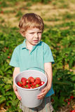 Happy little toddler boy on pick a berry farm picking strawberri Stock Photos