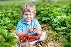 Happy little toddler boy on pick a berry farm picking strawberri Stock Photo