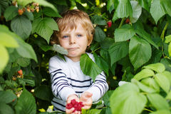 Happy little toddler boy with raspberries Stock Image