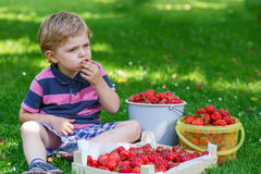 Happy little toddler boy in summer garden with buckets of ripe s Royalty Free Stock Image