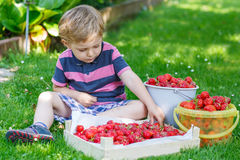 Happy little toddler boy in summer garden with buckets of ripe s Stock Images