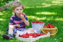 Happy little toddler boy in summer garden with buckets of ripe s Stock Image