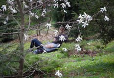 Happy loving couple spending time in the garden between trees of blossom magnolia. They are blurred. In foreground the tree of white magnolia. Spring flowers Stock Photo