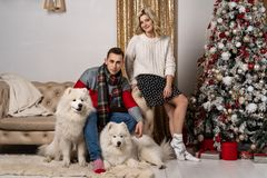 Happy loving young people and dogs having fun near the Christmas tree royalty free stock photos