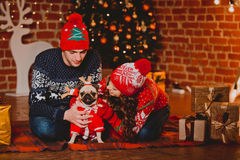 Happy loving young people and pug dog having fun near the Christmas tree. Smiling couple celebrating New Year. Toned Royalty Free Stock Photography