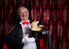 Happy magician with bunny royalty free stock photography