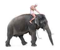 Happy mahout rides on an elephant Stock Photo