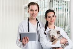 Young male and female veterinarian holding digital tablet stock photos