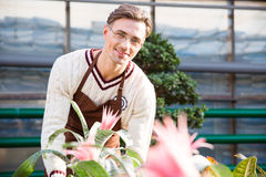 Happy male florist working with beautiful pink flowers Stock Photo
