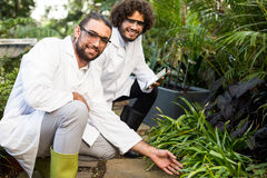 Happy male scientists inspecting plants. Portrait of happy male scientists inspecting plants at greenhouse Royalty Free Stock Images