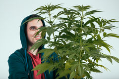 Happy man with cannabis plant Royalty Free Stock Photography
