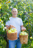 Happy man gathers apples Royalty Free Stock Images