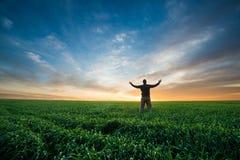 Happy man on green field of wheat at sunrise Stock Photos