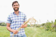 Happy man with his sheaf of wheat. On a sunny day Stock Photos