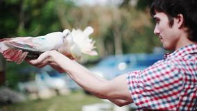 Happy handsome man holds beautiful colorful pigeons. Doves sitting on hand owner and waving her beautiful wings. Happy man holds beautiful colorful pigeons stock footage