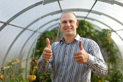Happy man in the hothouse. Happy man with tomatos plant in the hothouse royalty free stock photos