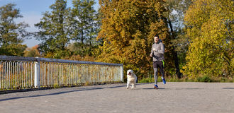 Happy man with labrador dog running outdoors Royalty Free Stock Images