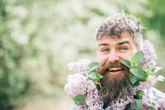 Happy man with lilac in beard. Bearded man smile with lilac flowers on sunny day. Hipster enjoy scent of spring blossom. Floristic decor and design. Spring royalty free stock photos