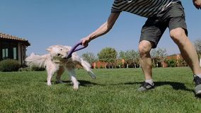Happy man playing with his white dog on a garden meadow n summer in slo-mo