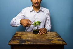 Happy man pruning his bonsai tree Stock Images