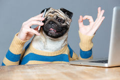 Happy man with pug dog head talking on cell phone Stock Images