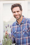 Happy man smelling his lavender plant Royalty Free Stock Image