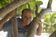 Happy man in a tree Stock Photo