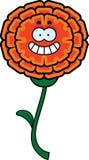Happy Marigold Stock Image