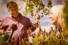 Happy mature couple gardening together Stock Image