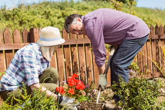 Happy mature couple gardening together Royalty Free Stock Photo