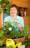Happy mature gardener with flowers smiling Royalty Free Stock Photos