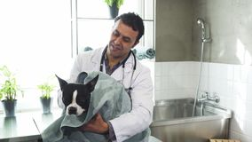 Cheerful mature male vet drying cute dog after washing at the clinic. Happy mature male professional vet smiling drying adorable puppy with a towel after washing Stock Images