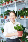 Woman chooses Crassula at flower store Royalty Free Stock Photos