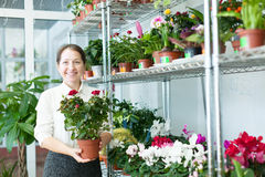 Mature woman chooses flower Stock Photography