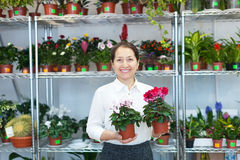 Mature woman with Cyclamen plant Royalty Free Stock Photos