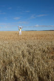 Happy Mature Woman in Field of Wheat Royalty Free Stock Image
